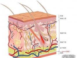 亲测韩国优雅斯蛋白线提升面部维持时间有1年多还不贵