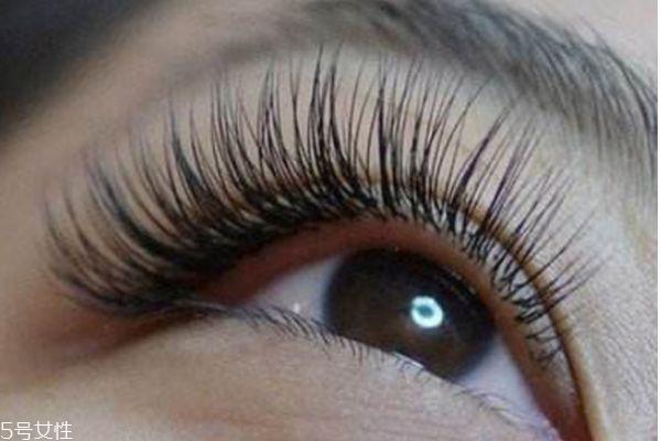 种植睫毛能管多久 种睫毛能维持多长时间 种植睫毛能管多久 种睫毛能维持多长时间 知识库 第3张